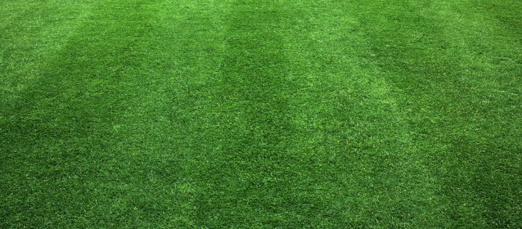 Satter frisch gemähter Rasen