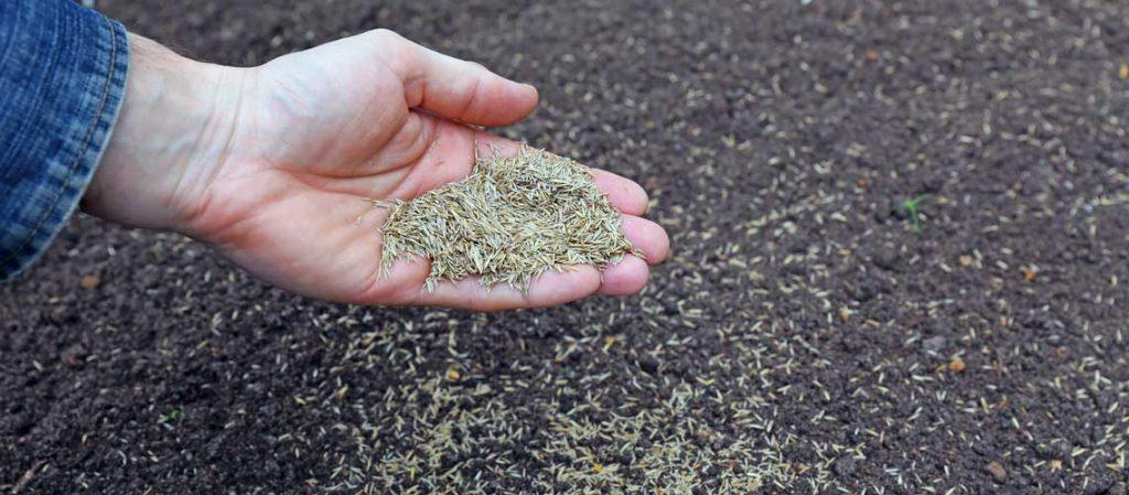 Rasensaat mit der Hand aussähen