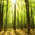 Sonne scheint im Wald durch die Blätter
