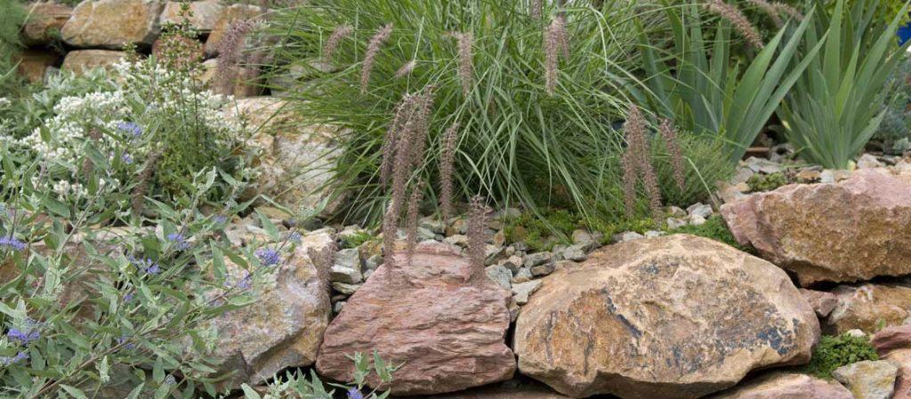 Steingarten mit Gräsern