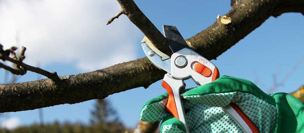 Baumschnitt mit einer Gartenschere
