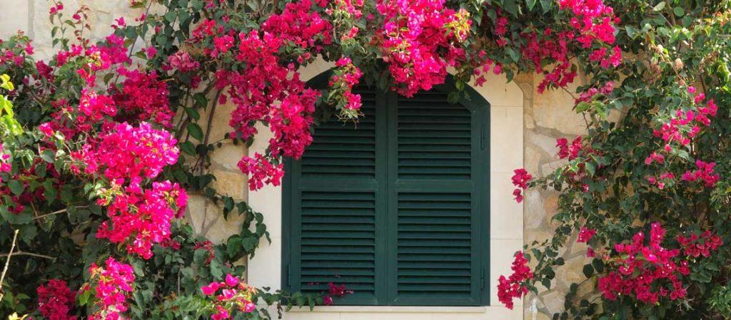 Kletterpflanze an einer Hauswand