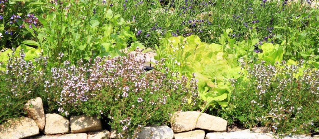 Ein mit Steinen abgegrenzter Kräutergarten
