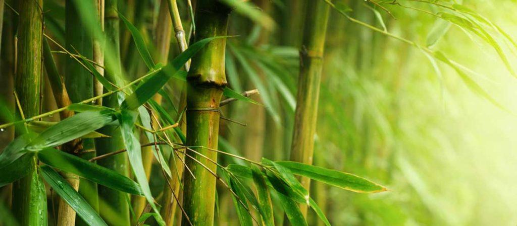 Bambuspflanzen in Nahaufnahme