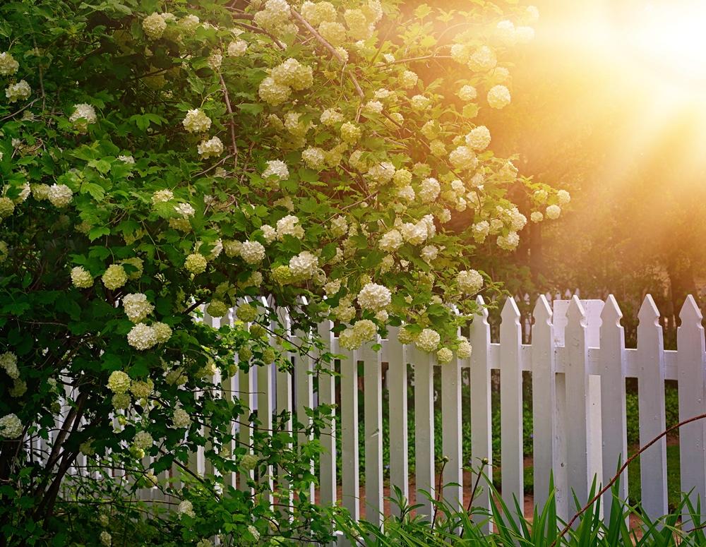 Weißer Holzzaun im Garten