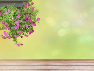 Wunderblume im Balkonkasten