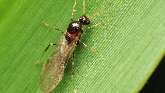 Eine fliegende Ameise auf einem Blatt
