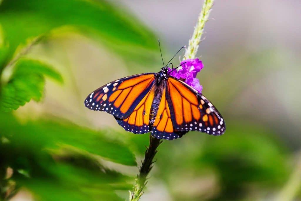Schmetterling 653218
